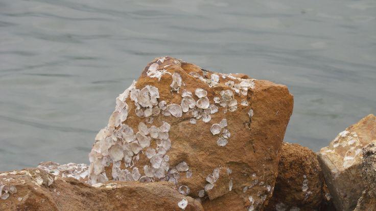 La vida en la piedra!