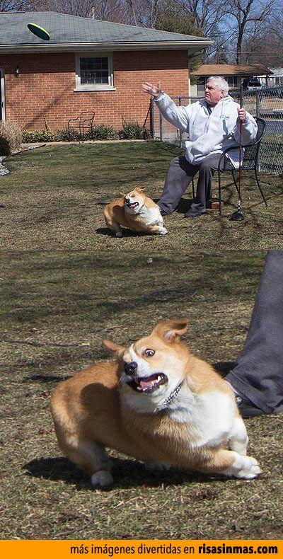 Caras de perros divertidas.