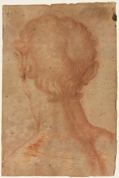 Man's Head from the Back, 16th century?  copy after Agnolo Bronzino (Italian, 1503-1572) -  red chalk with red and white gouache