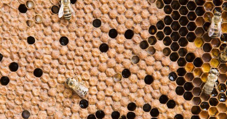 Cómo secar miel. La miel es un alimento moderadamente imperecedero. ¡Los arqueólogos han encontrado tarros de miel en las tumbas egipcias que parecen ser de más de 2.000 años de antigüedad! Contrariamente a lo que podría esperarse, la deshidratación de la miel no aumenta su vida útil. El contenido de azúcar en la miel es tan alto que se puede almacenar durante ...