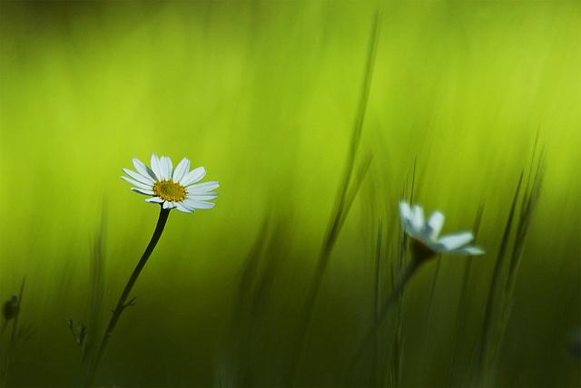 Under the green sea by nexus6, via Flickr