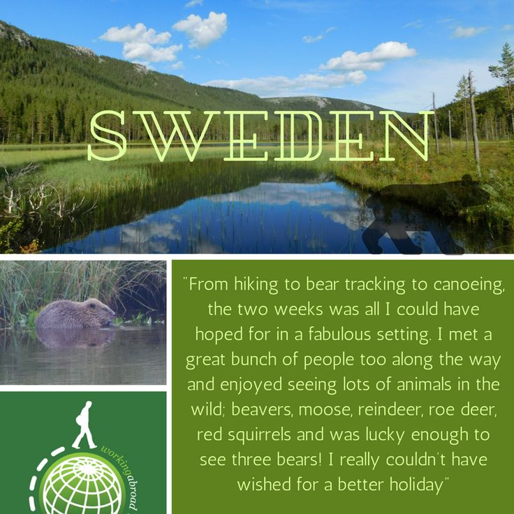David Archer enjoyed his time as a volunteer as our Bear and Wildlife Tracking project in Sweden!