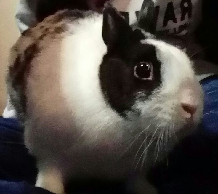 R.I.P Stamper i really miss you i will never forget you 😢 you was the best bunny i know you bite me and scar me but i know you was playing with my hand i will never forget you never 😢😢😢