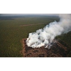 Indonesia's Forests Will be Gone by 2043: NGOs