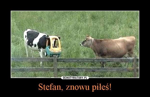 Stefan, znowu piłeś! | LikePin.pl - Cytaty, Sentencje, Demoty