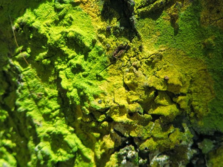 Airlife te informa qu forma y color presenta el moho algunos tipos de moho creciendo se ven - Manchas de moho ...