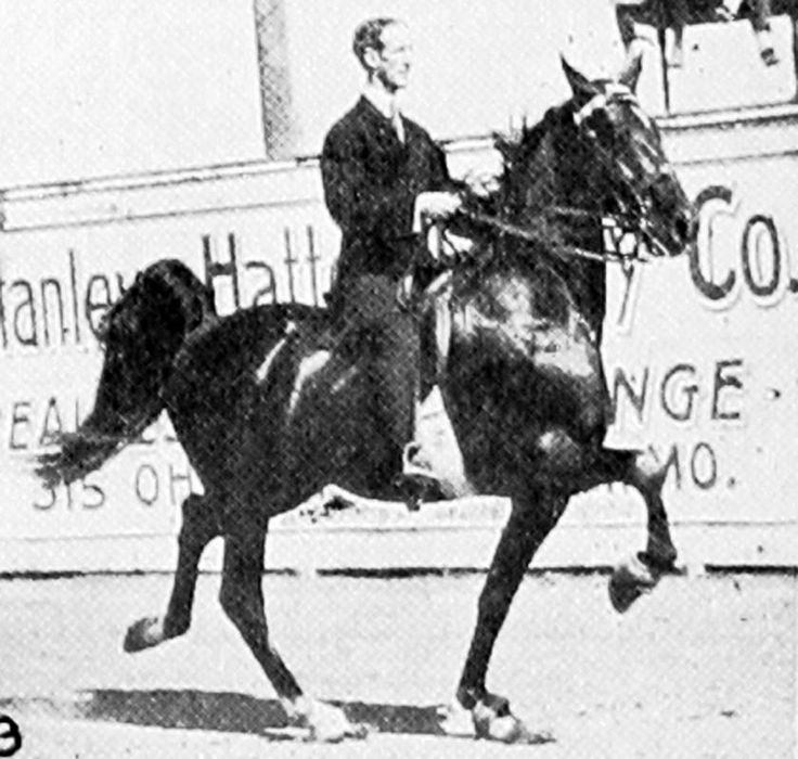 A nice racking photo of Astral King (a son of Bourbon King), winner of the five gaited stake at the 1915 Kentucky State Fair. Quite interestingly, he sired Astral Jones who sired Upwey King Peavine who then sired Upwey King Benn who next sired the extremely famous Morgan sire -- Upwey Ben Do