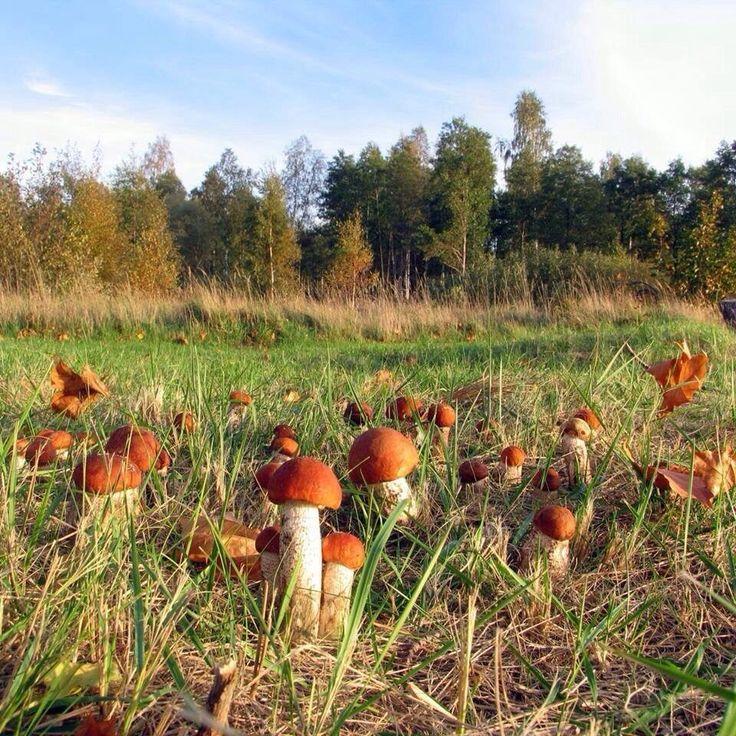 Много грибов картинки