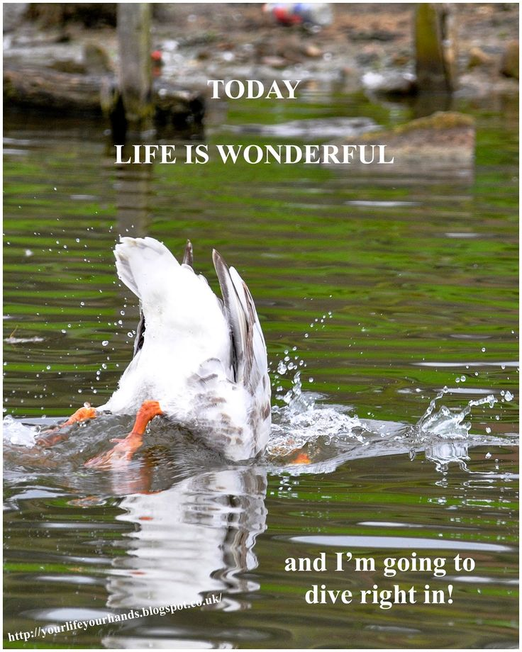 my daily affirmation and my reflections on it for 22nd April
