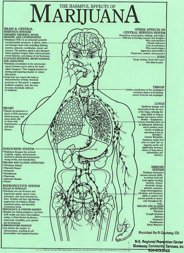 the negative effects of the use of marijuana The impact of marijuana legalization  are susceptible to the negative effects of marijuana because parts  as for the long-term effects of marijuana use,.