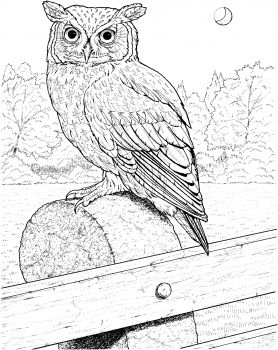 A lot of free coloring pages. Supercoloring.com