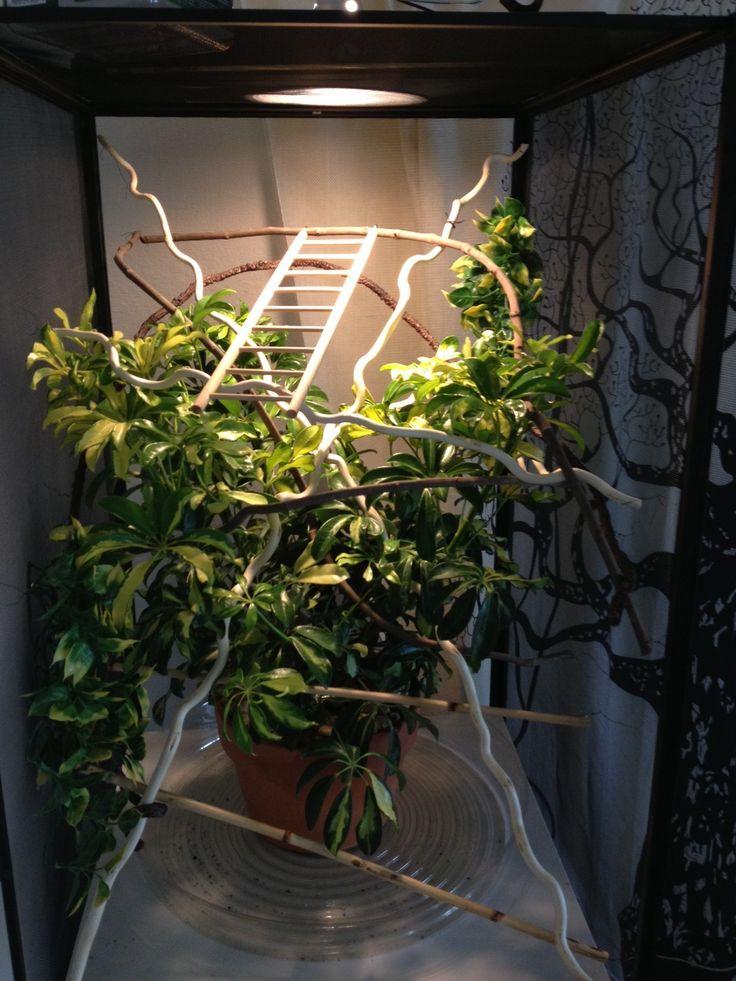 First cage built! - Chameleon Forums