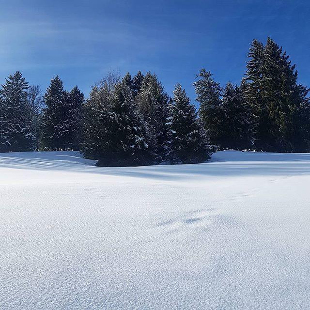 Snow & trees.  #landscape #trees #snow