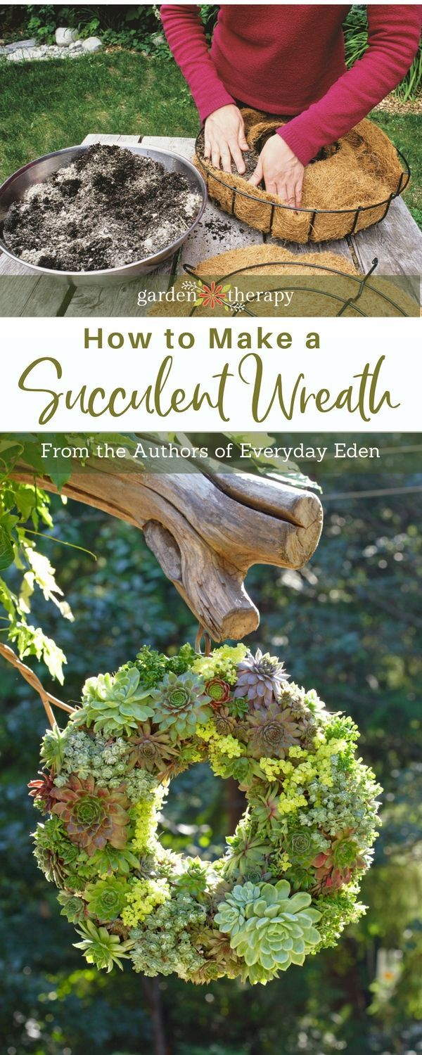 In this DIY project you learn how to simply make a gorgeous living succulent wreath to hang or use as a table centerpiece. Full instructions with photos. #gardentherapy #succulents #wreath via @garden_therapy