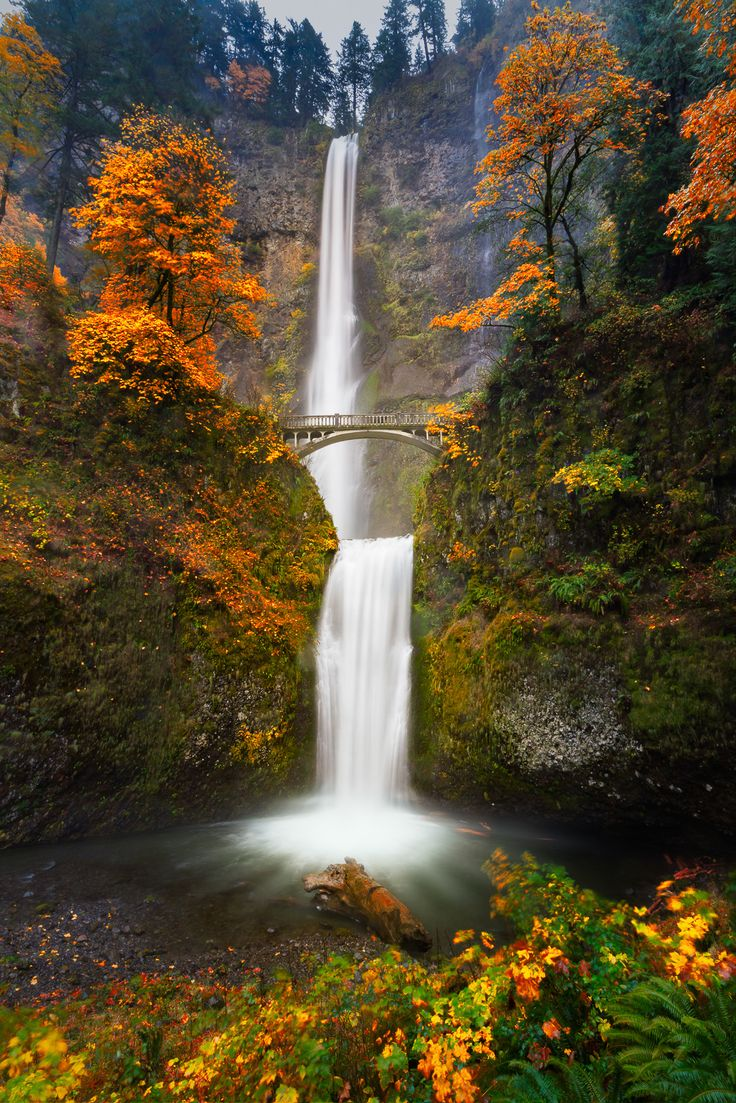 Multnomah Falls in Autumn colors - This is a slow shutter shot of Multnomah Falls in Autumn colors.