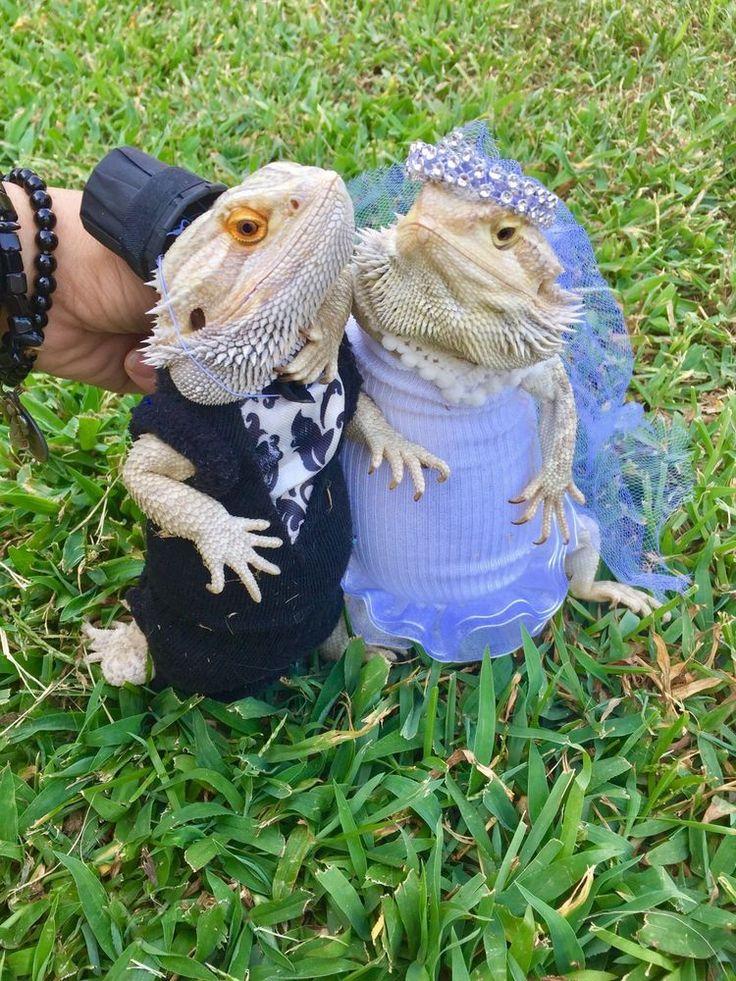 2PC XLRG WEDDING COSTUME DRESS 4 BEARDED DRAGONS   eBay