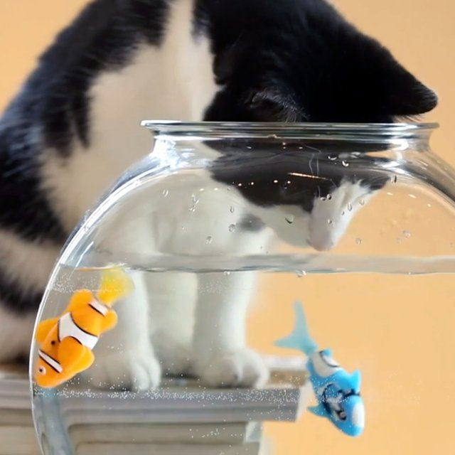 1000 images about cat toys store bought on pinterest for Swimming fish cat toy