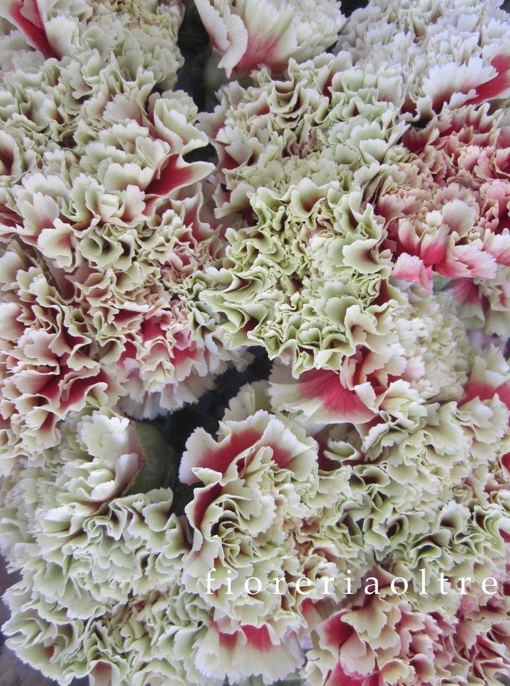 Fioreria Oltre/ Carnations