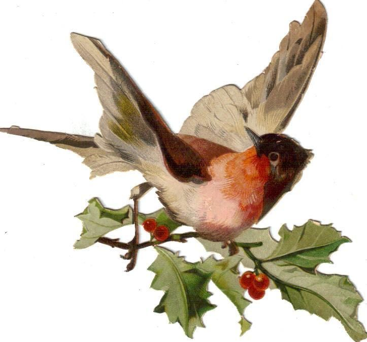 Victorian Die Cut Scrap Colorful Snow Bird on Holly Branch c1880