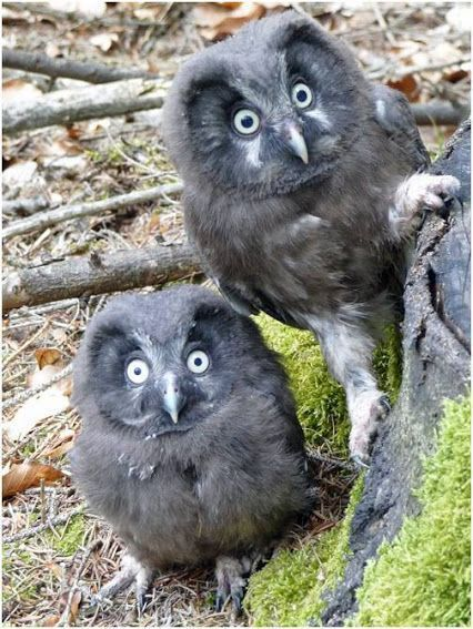 """Frequently, people wind up giving up their parrots because the birds are not able to talk <a class=""""g1-link g1-link-more"""" href=""""https://meowlogy.com/2018/01/24/21-greatest-owl-pictures-youll-ever-see/"""">More</a>"""