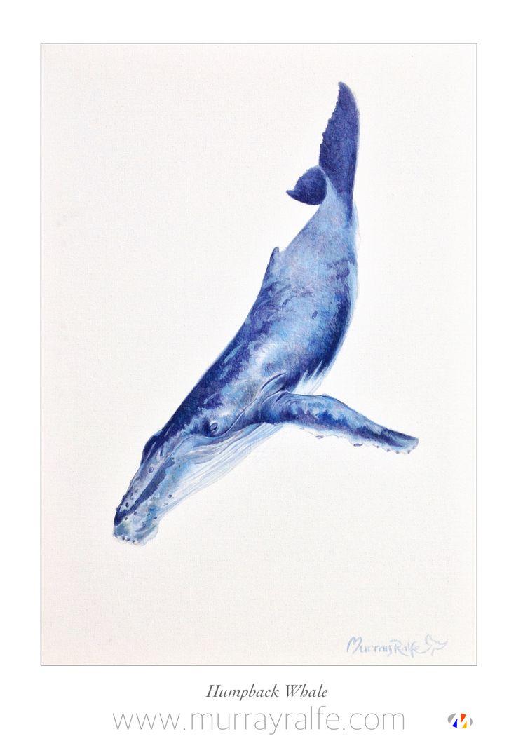 Humpback Whale  Oil on canvas  Murray Ralfe  www.murrayralfe.com