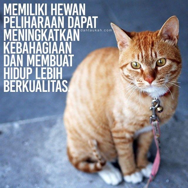 Memiliki hewan peliharaan dapat meningkatkan kebahagiaan dan membuat hidup lebih berkualitas. #dahtaukahfact #dahtaukah