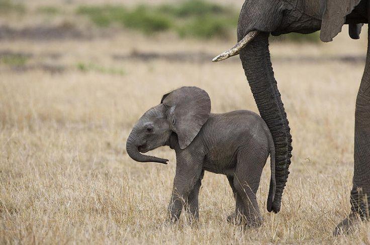 """African Elephant Mother and Calf"" - photo by Suzi Eszterhas"