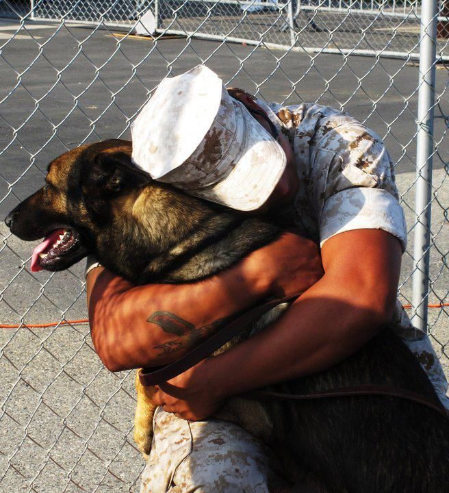Watch over me and I'll watch over you. Dog Bless the strength and bravery of these dogs and heroes. 49 pairings so far!