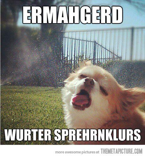 Sprinklers!
