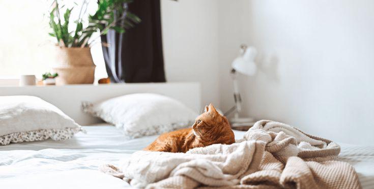 Cómo dormir mejor para aumentar tu productividad - Táctica Práctica Have A Good Night, Good Night Sleep, Old Sheets, Most Luxurious Hotels, Decoration Originale, Scandinavian Bedroom, Guest Bedrooms, Teen Bedrooms, Tips