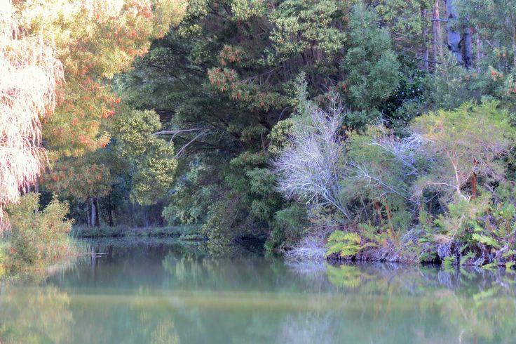 Caminata, laguna Grollmus