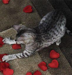 play new valentine games