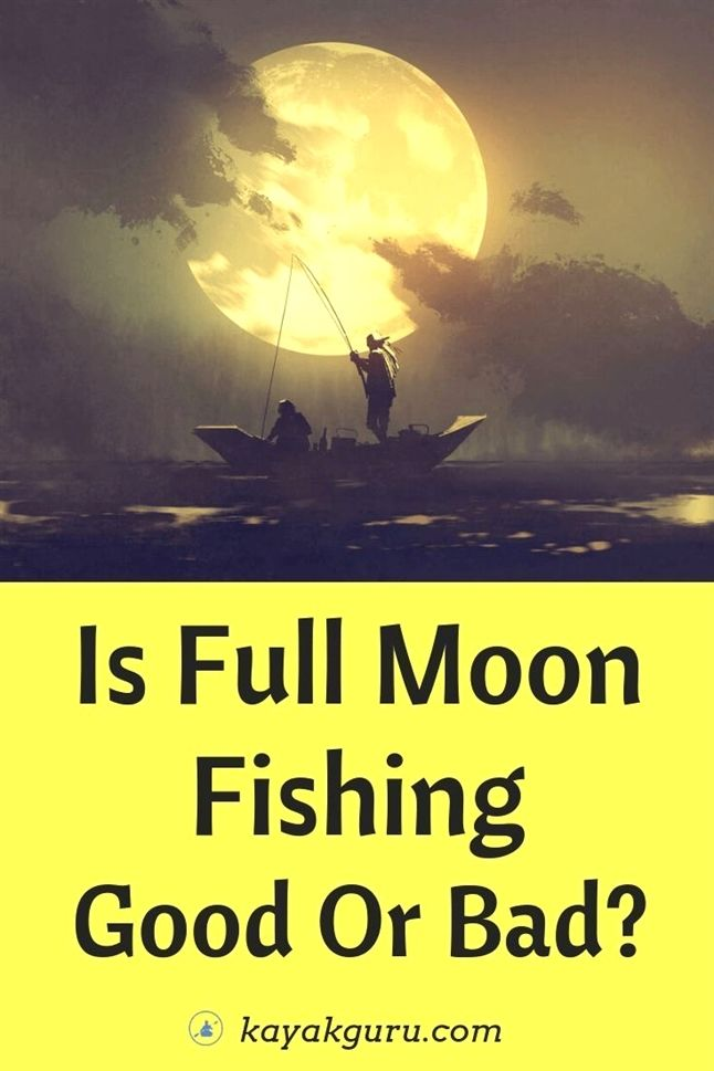 Easy Ways To Increase Your Fishing Success Salt Water Fishing Best Fishing Days Fly Fishing