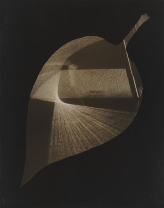 György Kepes, 'Leaf and Prism' 1938
