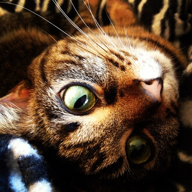 Tabby cat named Lucy with HUGE eyes! Tabby cat names