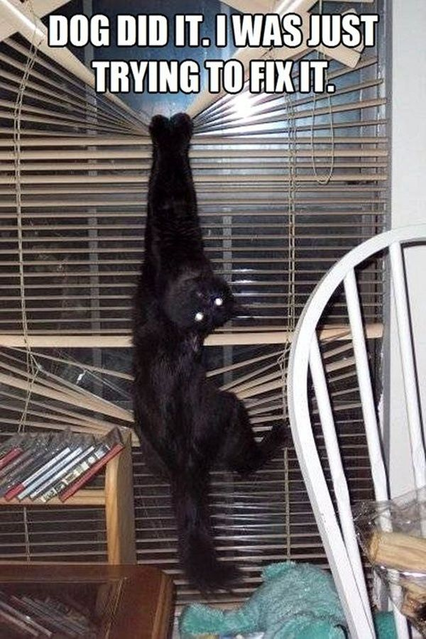 45 Pictures of Cats being Naughty | http://animals.ekstrax.com/pictures-of-cats-being-naughty/
