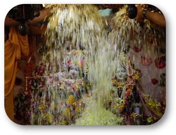 Pushya Abhishek (2013) Pics of Sri Sri Radha KunjaBihari at ISKCON Pune.