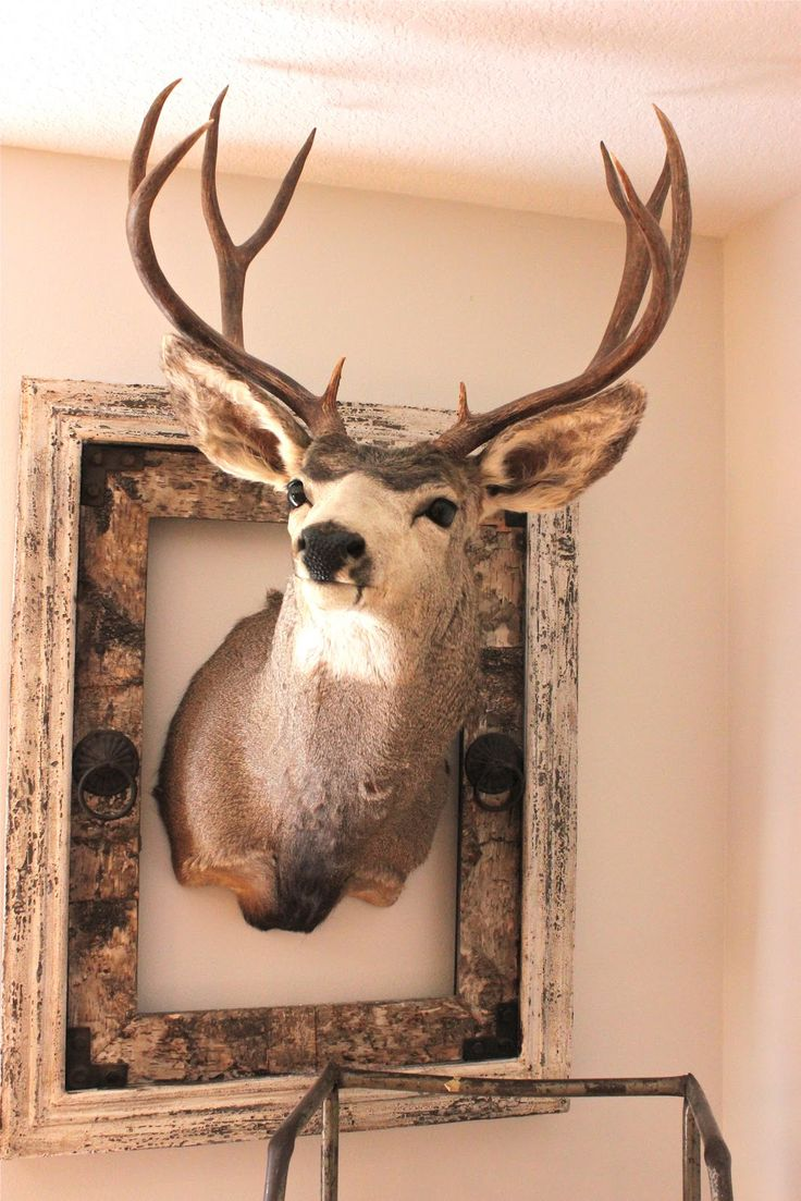 Deer skull mount ideas - Love The Rustic Fram Around The Deer