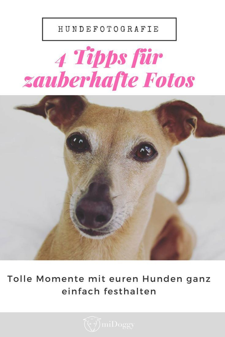 4 Einfache Tipps Fur Zauberhafte Fotos Von Euren Hunden Tipps Hundefotografie Hunde