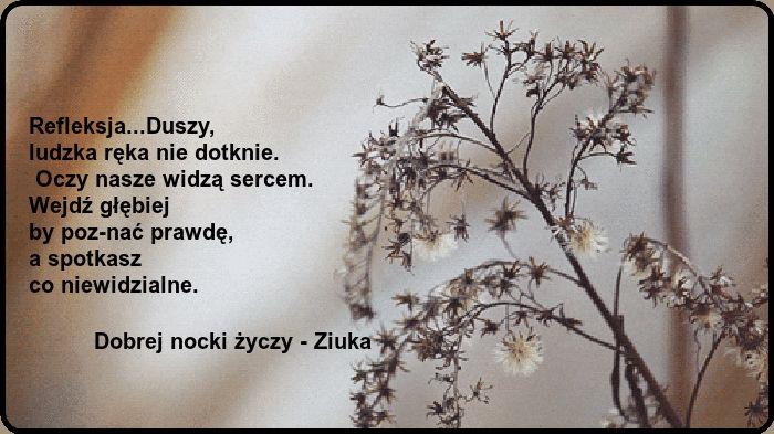 FotoZrzut.pl - darmowy hosting obrazków, hosting fotek, hosting zdjęć