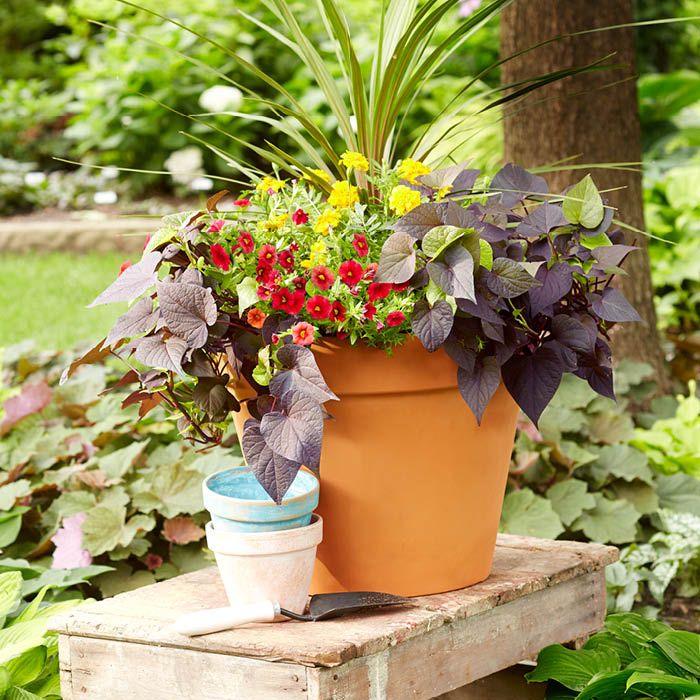 Try Our 10 Container Garden Ideas Including How To Create A Natural Focal  Point Using New