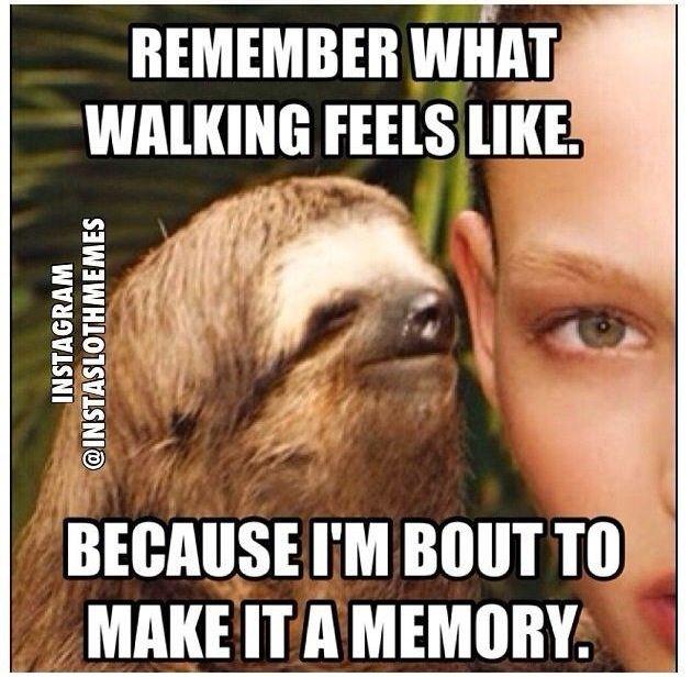 Sloth Meme Dragon Balls