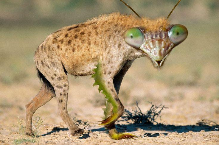 photoshopped-animal-combinations