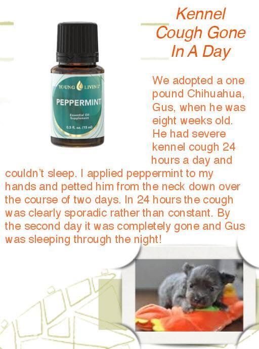 Peppermint Oil for Kennel Cough ~