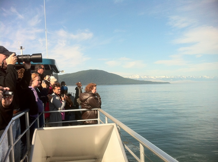 Whale Watching Oosterdam cruise HAL Cruises