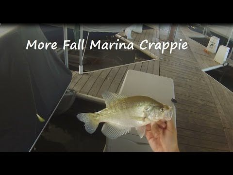More fall marina crappie fishing - YouTube