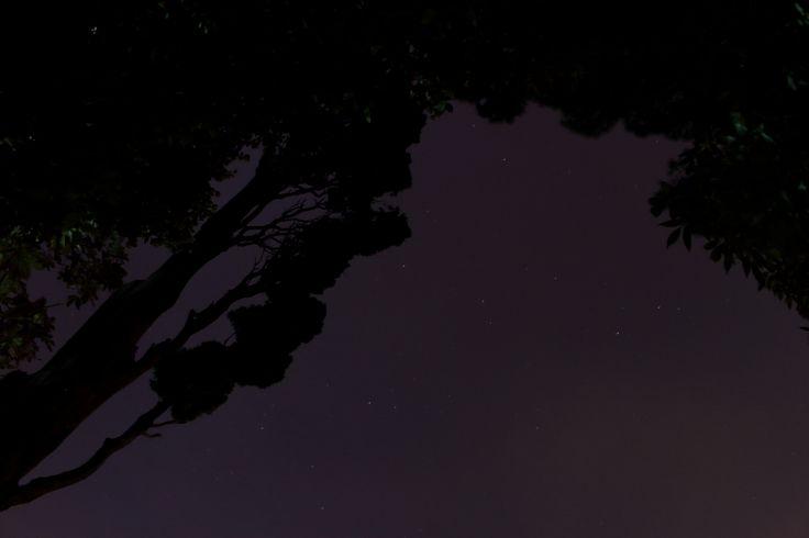 Trees and stars. by Oğuzhan Karaçakır - Photo 124801427 - 500px