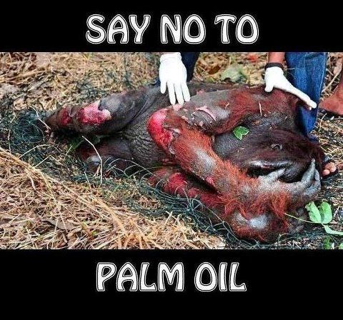It is so important that we only buy products without palm oil. The Orangutan is critically endangered because their forests are being bulldozed and set on fire for palm oil plantations to take over.  These beautiful animals truly deserve to live but every day we lose more and more of them.
