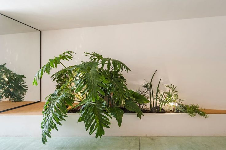Cool and charming loft where Condesa and Roma meet - Lofts for Rent in Ciudad de México