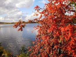 Lapland during ruska (the time when leaves turn brown)